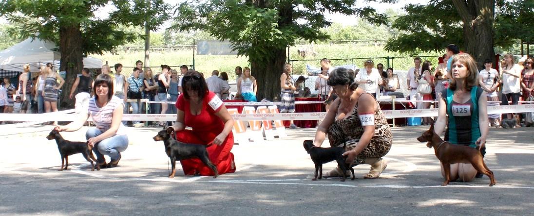 Выставка в Мелитополе 09.06.2012